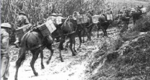Transport skrzynek z amunicją na mułach do pozycji wyjściowych w górach.