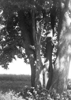 Krzyż przy drodze Węgleszen-Oksa, pod którym odbyła się zbiórka żołnierzy AK przed wymarszem na akcję w Oksie.
